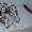 Щенки далматинцы #949786